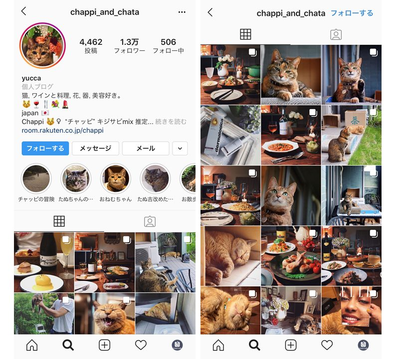 instagram-flower-influencer-yucca